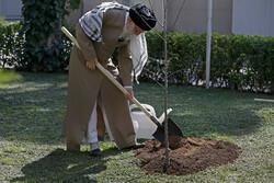 Devrim Lideri'nin ağaç dikme töreninden kareler