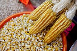 کشاورزان مکزیک خواهان تعرفههای متقابل برای واردات آمریکا شدند