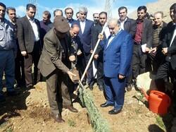 غرس ۲۵۰۰ اصله نهال در بیمارستان امام رضا(ع) کرمانشاه