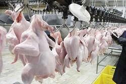 ۱۳۰ تن گوشت مرغ در ایلام ذخیره سازی شد