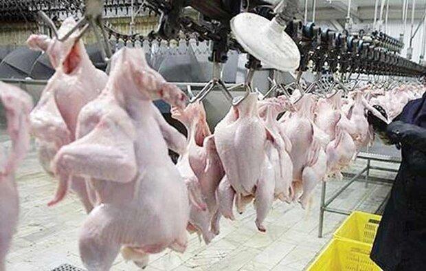 عرضه مرغ تنظیم بازاری همچنان ادامه دارد/کاهش قیمت در بازار