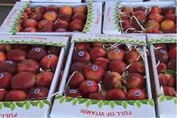 میوه شب عید آذربایجان شرقی آماده توزیع است