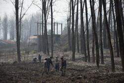 کاشت نهال توسط وزیر جهاد کشاورزی در طرح زراعت چوب شهرستان تالش