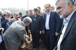 نهال کاری وزیر جهاد کشاورزی در طرح زراعت چوب تالش