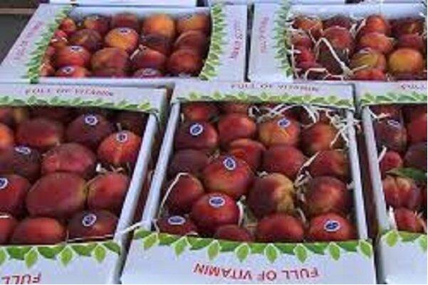برپایی ۴۵ غرفه عرضه میوه شب عید در شهرستان همدان