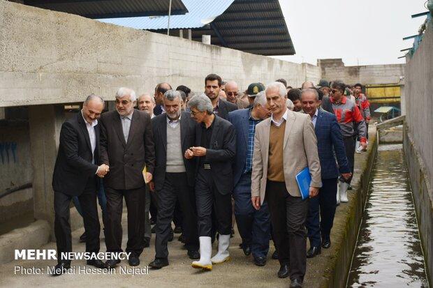 افتتاح واحد استحصال و بسته بندی خاویار پرورشی در تالش