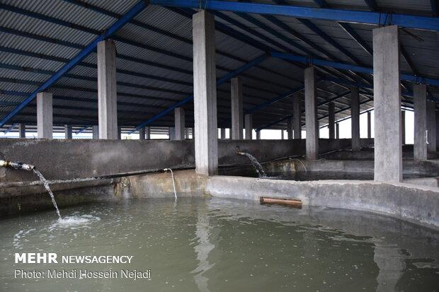 ۱۵ میلیون مترمکعب روان آب در زنجان استحصال شد