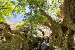 Chaharmahal and Bakhtiari prov., a four-season paradise
