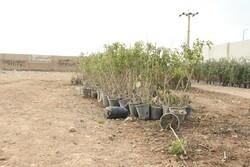 غرس ۲۸ هزار اصله نهال همزمان با هفته منابع طبیعی در اسدآباد