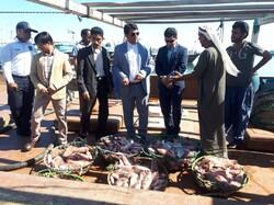 آغاز تهیه وتوزیع ماهی برای مصرف مردم با قیمت مصوب ستادتنظیم بازار