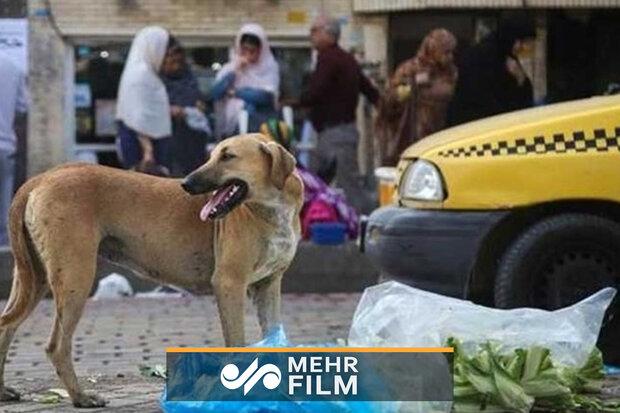 حمله سگهای ولگرد به یک خانم در لواسان