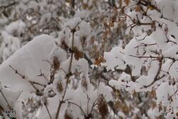 اواخرهفته آذربایجان غربی برفی می شود/ورود سامانه بارشی از پنجشنبه