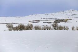بارش ۱۲۰ سانتی متری برف در درازنو/ گمیشان رکورددار بارش باران