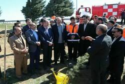 نهال کاری ۱۵ کیلومتر از حاشیه محور آزاد راه قزوین- زنجان