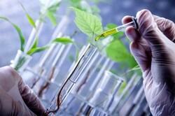 آغاز تحقیقات گسترده دانشگاههای علوم پزشکی درباره محصولات تراریخته