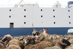 سومین کشتی حامل دام زنده سبک وارد بندر چابهار شد
