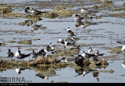 Northwestern Kani Barazan Wetland play host to 30,000 migratory birds