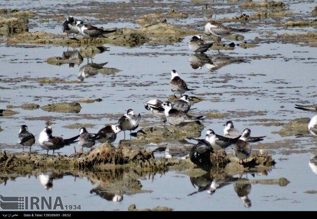 Northwestern Kani Barazan Wetland play host to 30,000 migratory birds
