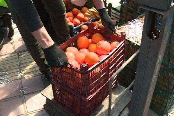 ۵۷۷ تن میوه در ایام نوروز در استان بوشهر توزیع شد