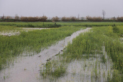 سیل به بخش کشاورزی گلستان ۱۰۹۰ میلیارد تومان خسارت زد