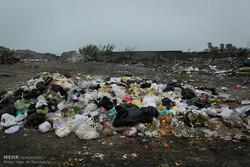 زبالهها را به نهرها نریزید/ کاهو اثر سموم ضد موش را خنثی میکند