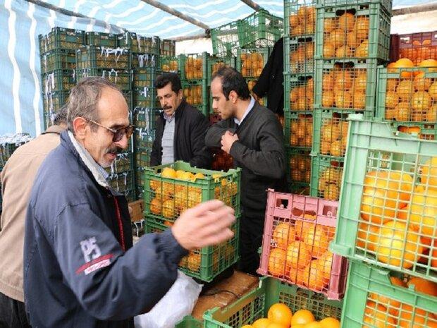 توزیع ۹۸ درصد سهمیه میوه عید در دامغان/ حمل ۱۰ تن میوه درخواست شد