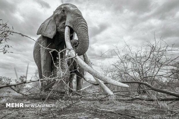 اثرات تغییر اقلیم بر تنوع زیستی/با علم امروزی ما انقراض فاجعه است
