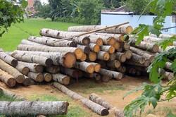 رشد ۱۳۸ درصدی کشفیات چوب قاچاق در شفت