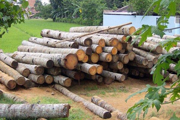 جزئیات اجرای طرح زراعت چوب/طرح «نکاشت» در جنوب تهران اجرا میشود