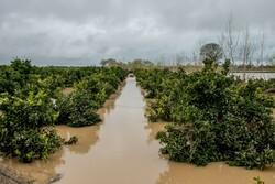 خسارت ۹۸۳ میلیارد ریالی سیلاب به بخش کشاورزی گنبدکاووس
