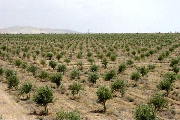 طرح توسعه جنگل در زنجان کلید خورد