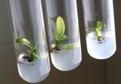 فناوری بذر صیفیجات در کشور توسعه می یابد