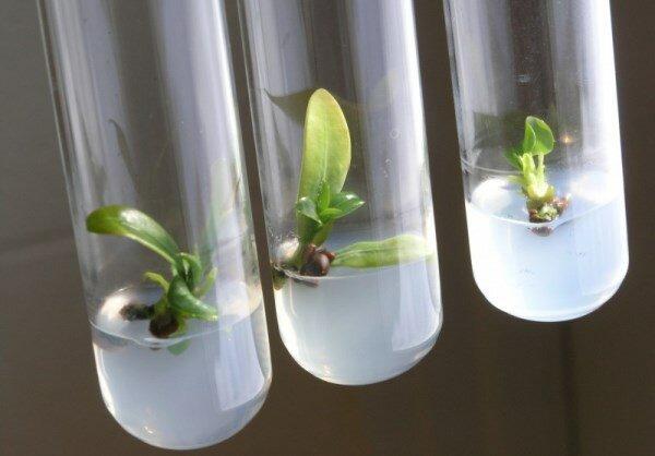 ظرفیتهای موجود کشور در حوزه فناوری جلبک شناسایی میشود
