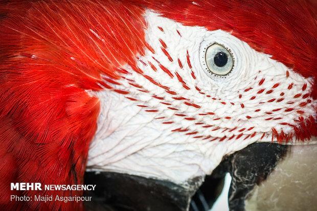 پرندگان از نمای نزدیک