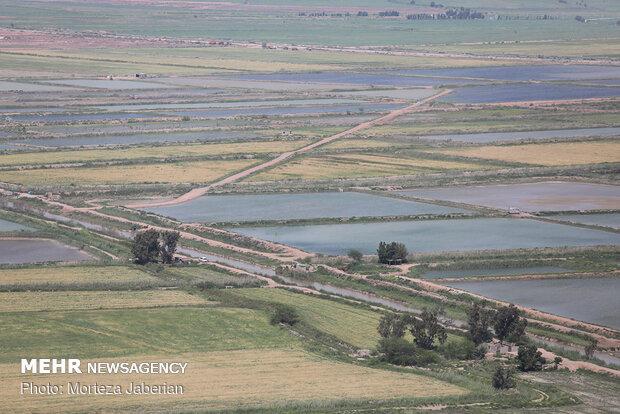 سیلاب مدیریت نمیشد چند شهر خوزستان زیر آب میرفت
