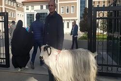 Oy vermeye keçisiyle geldi