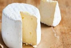 خط تولید پنیر پیتزا در چهارمحال وبختیاری راه اندازی شد