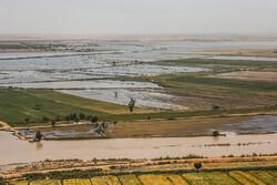 برآورد ۱۷ میلیارد تومان خسارت به کشاورزی خرمشهر