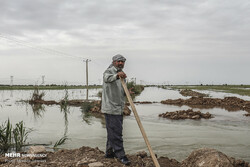 Flood causes massive damage to farms in southwestern Iran
