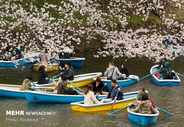 تلاش ژاپن برای  ترغیب گردشگران به داشتن بیمه مسافرتی