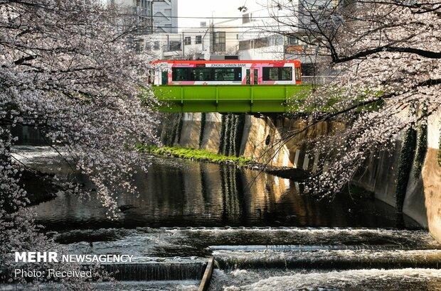 تشکیل کنسرسیوم گردشگری ژاپن/انتظار فعالان گردشگری از سفیر ایران