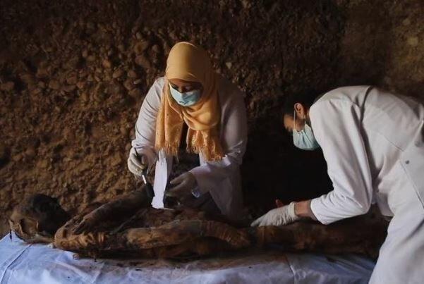 مقبره ای پر از موش، گربه و شاهین مومیایی شده در مصر کشف شد