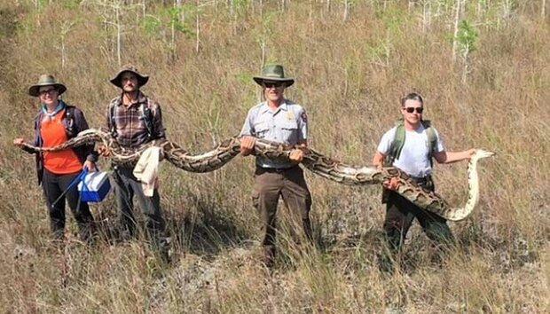 امریکی ریاست فلوریڈا میں15 فٹ لمبا اژدہا پکڑ لیا گیا