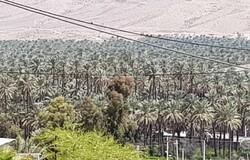 ورودی و خروجی خاوران فارس در روز طبیعت پایش میشود