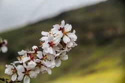 """الربيع في سهول """"كردستان"""" / صور"""