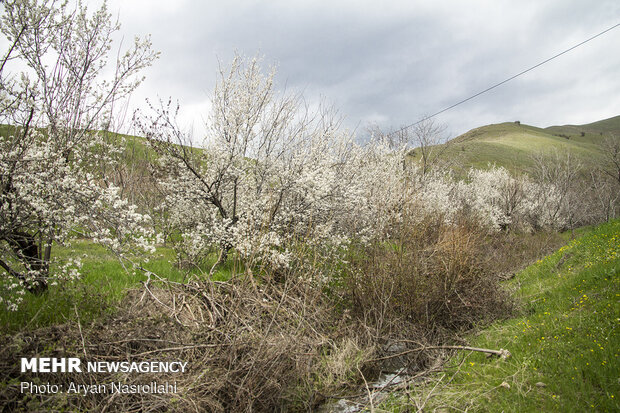 Sparkling colors during springtime in Kordestan prov.