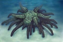 شناسایی فسیل آبزی ۴۳۰ میلیون ساله در انگلیس