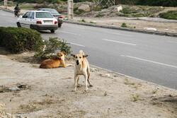 ضرورت وجود مدیریت توانمند در حوزه حیوانات شهری