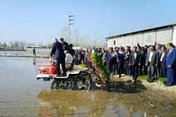 اولین نشاء مکانیزه برنج کشور در بابلسر انجام شد