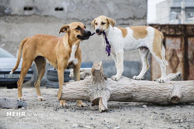 یورپی ملک سلواکیہ میں کتے بچاتے ہوئے تین خواتین ہلاک